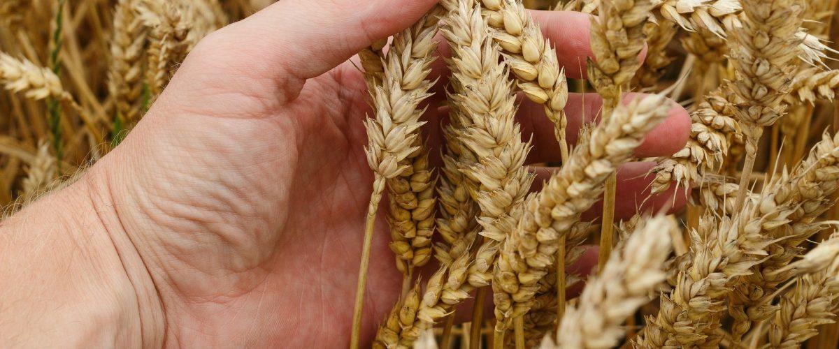 Regionale Produkte von regionalen Landwirten